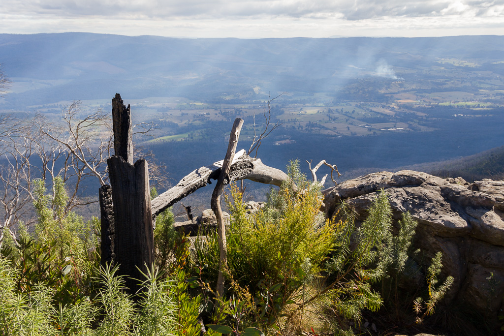 burnt-trees-views-from-razorback-track-cathedral-ranges
