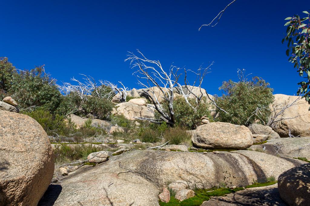 rocks-trees-blue-sky-mt-mcleod