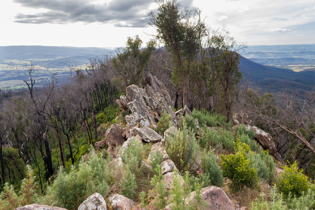 rocks-trees-razorback-cathedral-ranges