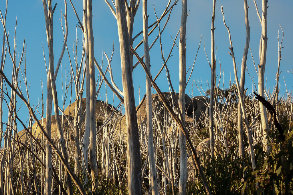 rocks-white-eucalypt-branches-sunset