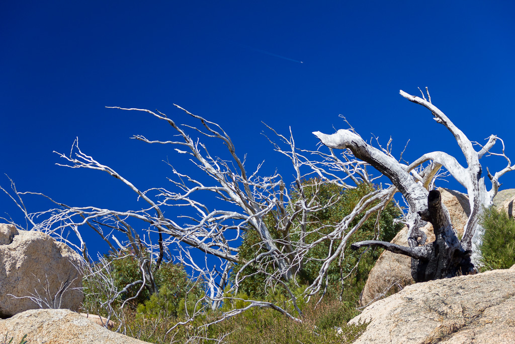 white-branches-blue-sky-mt-mcleod