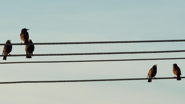 birds-on-telephone-wires