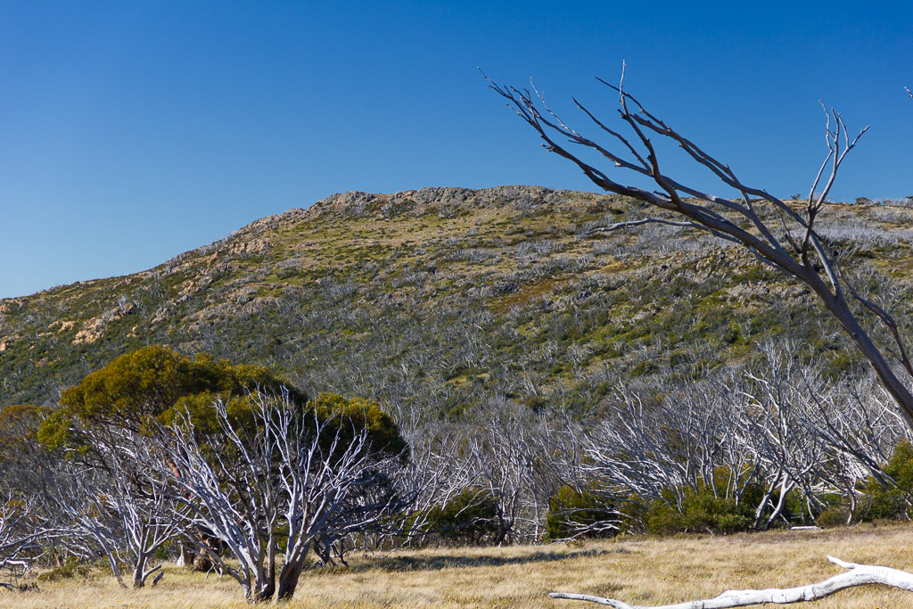 mount-wellington-alpine-region
