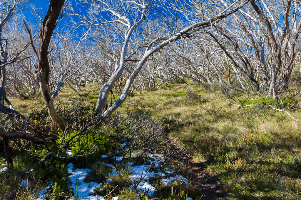 patchy-snow-moroka-gap-walking-track-alpine-region