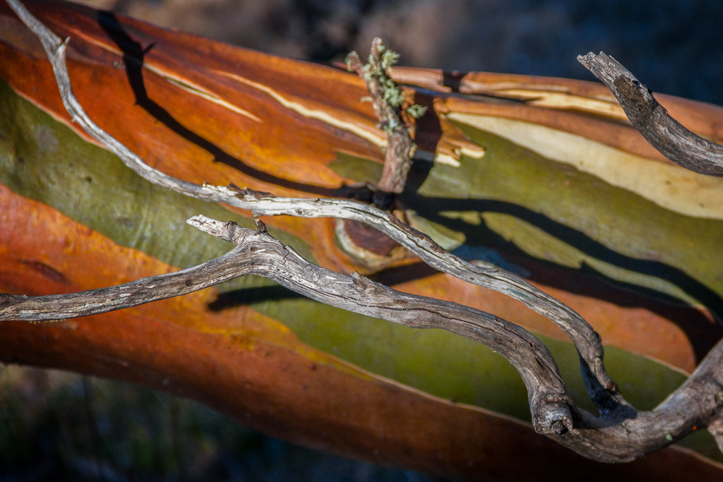 snow-gum-colour-alpine