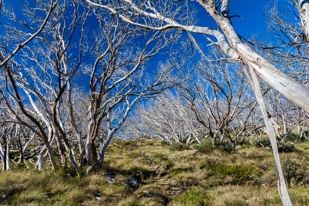trees-moroka-gap-walking-track-alpine-region