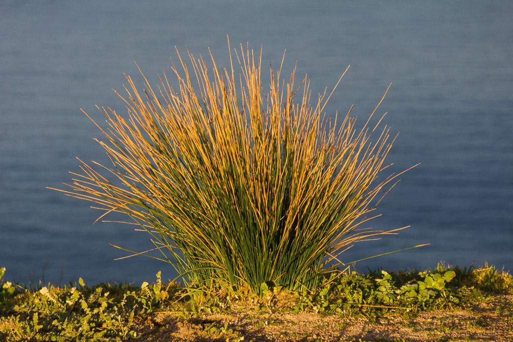 grass-cape-woolamai