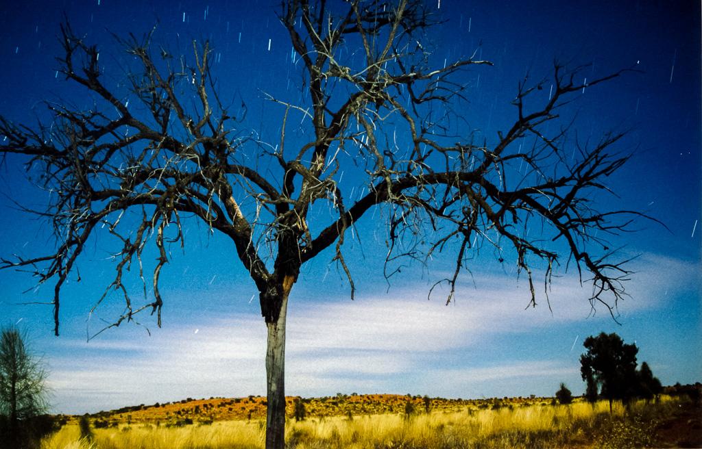 long-exposure-night-tree