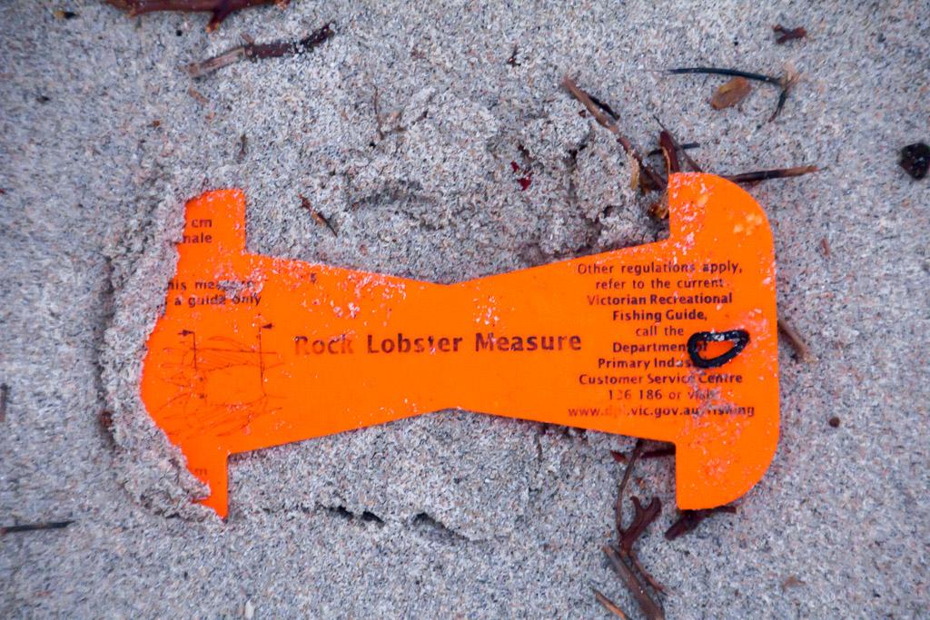 rock-lobster-guage-on-beach