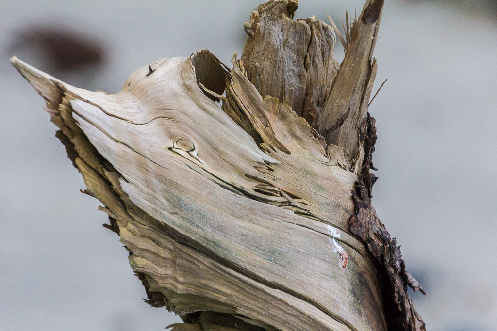 snapped-tree-branch-on-beach