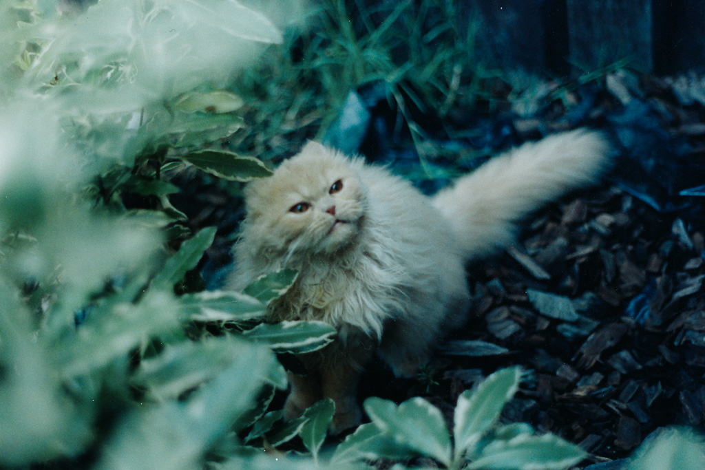 tango-the-cat-in-garden