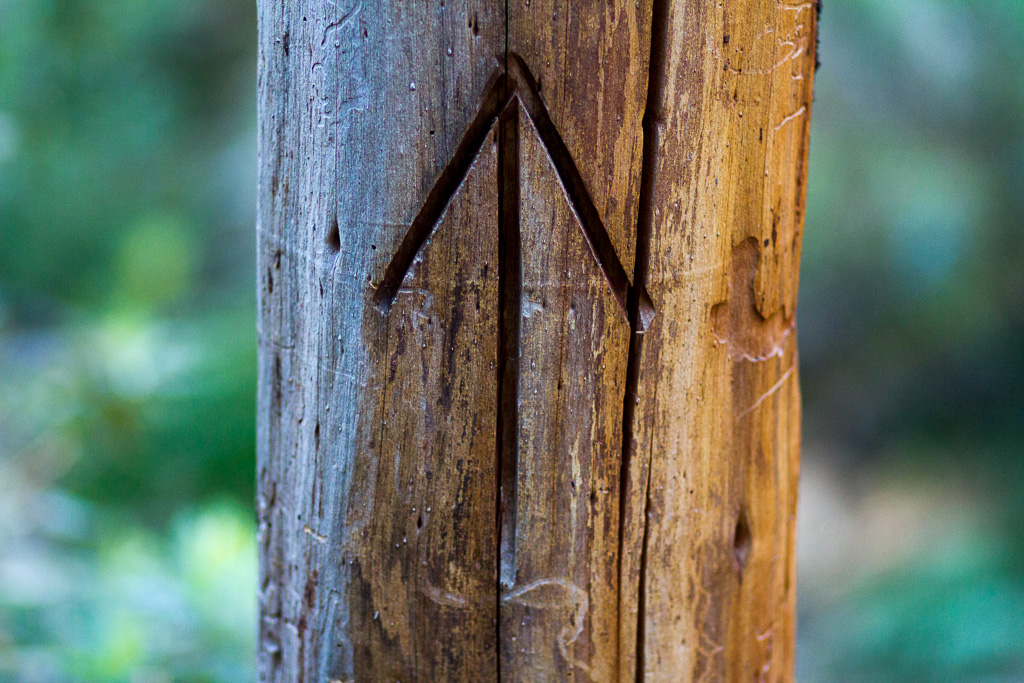 arrow-engraved-into-tree