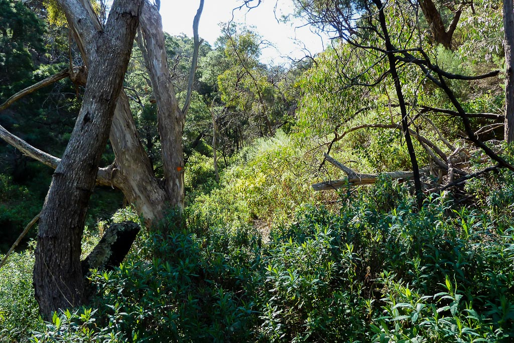 bush-track-ingliston-gorge
