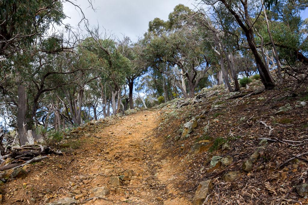 climbing-path-werribee-gorge