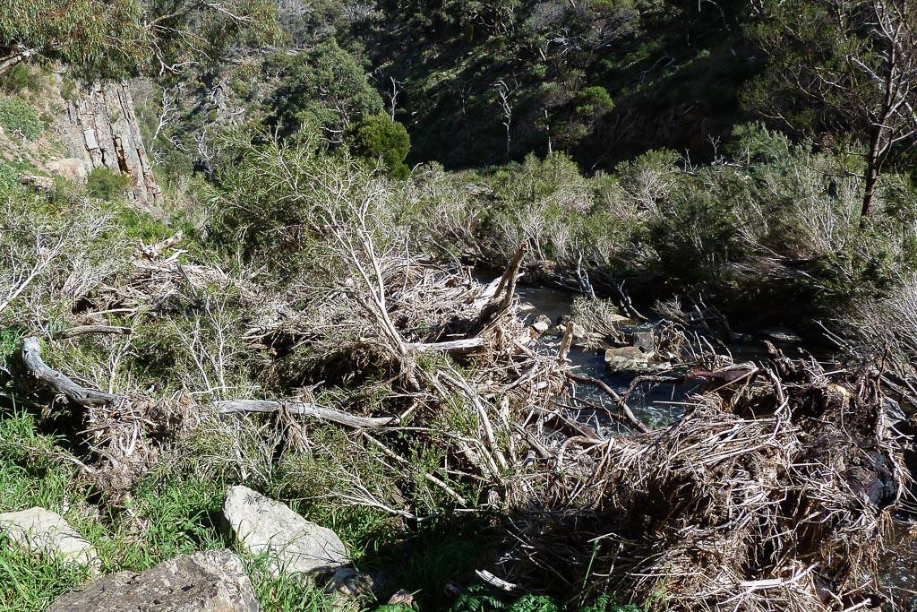 flood-debris-werribee-river