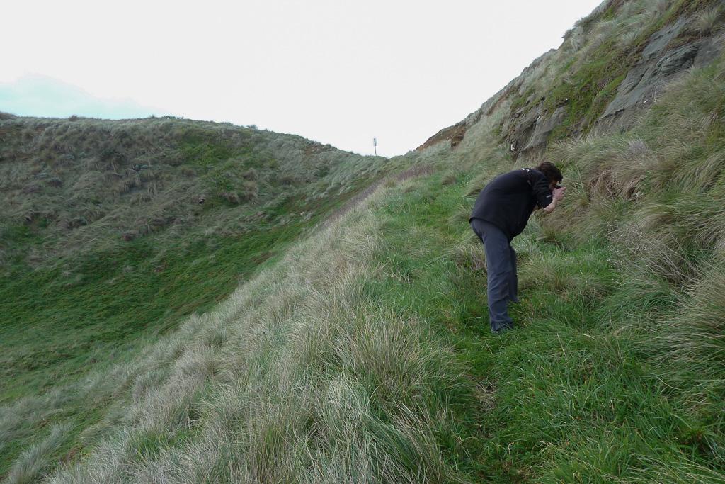 grass-embankment-near-beach