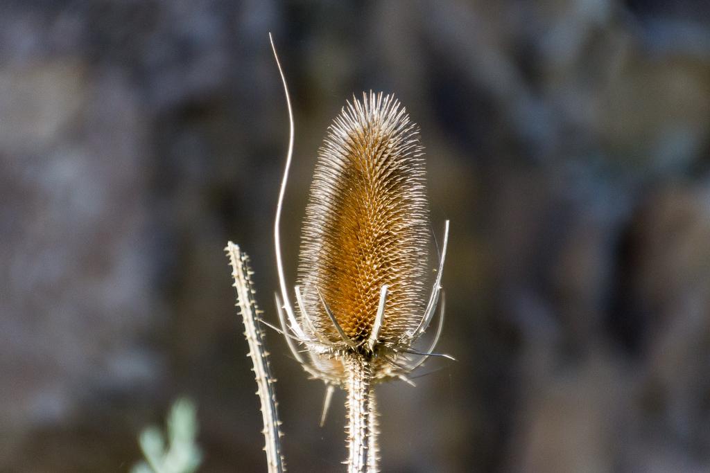 grass-seed-werribee-gorge