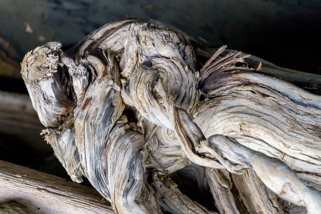 large-piece-timber-driftwood