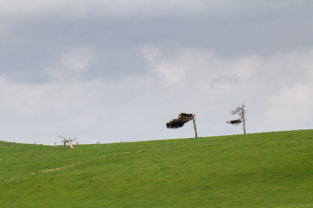 lone-trees-on-hill-top