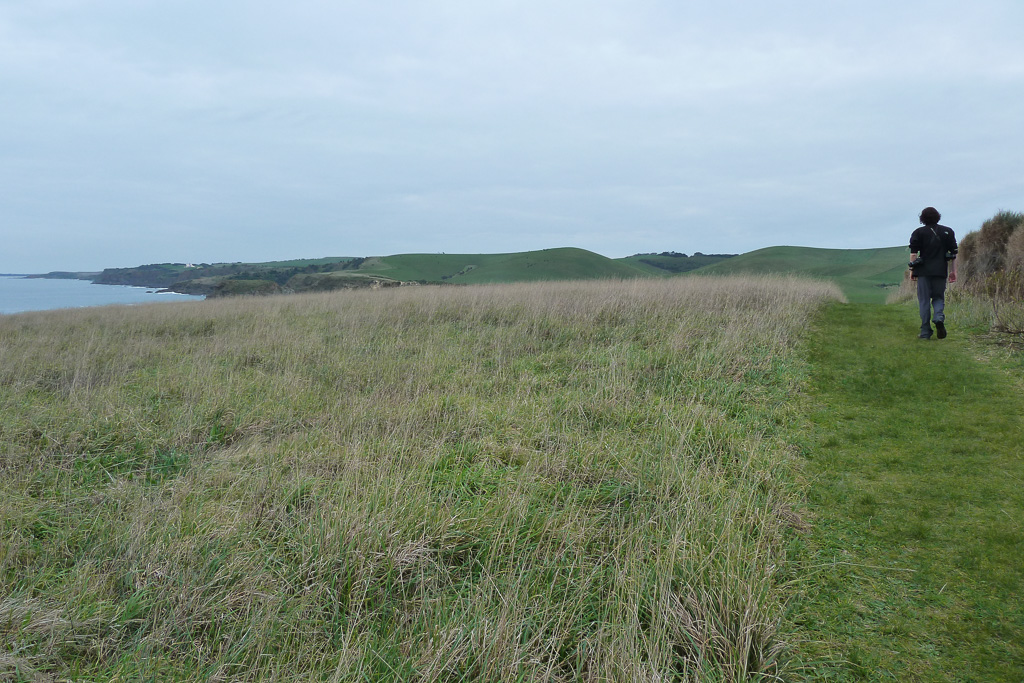 on-george-bass-coastal-walk-grass-track