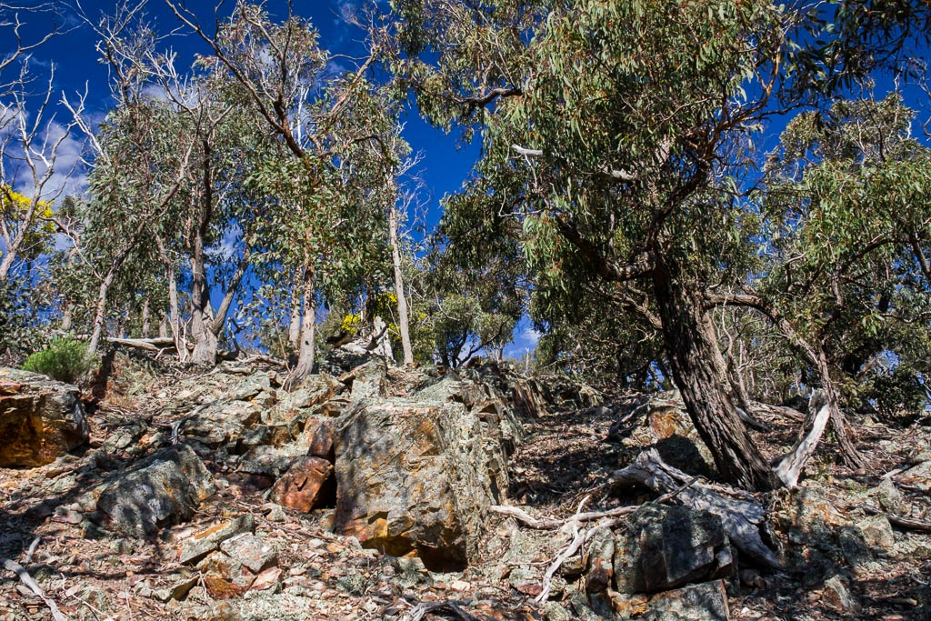 rocks-blue-sky-eucalypt-trees-ingliston-gorge