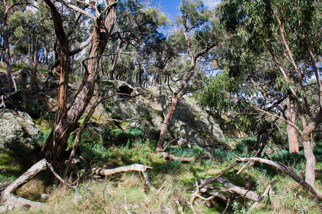 sloss-gully-ingliston-gorge-werribee