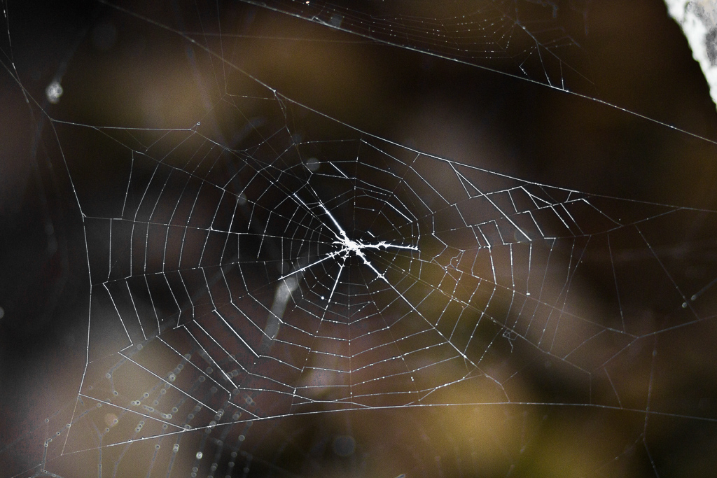 spider-web-ingliston-gorge