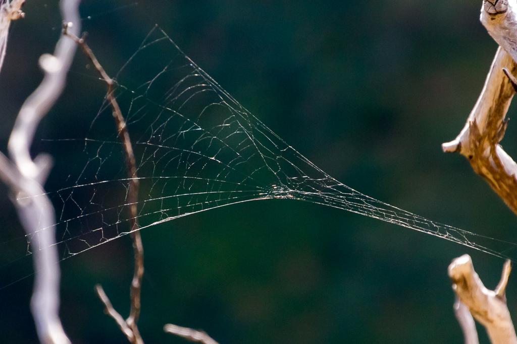 spider-web-werribee-gorge
