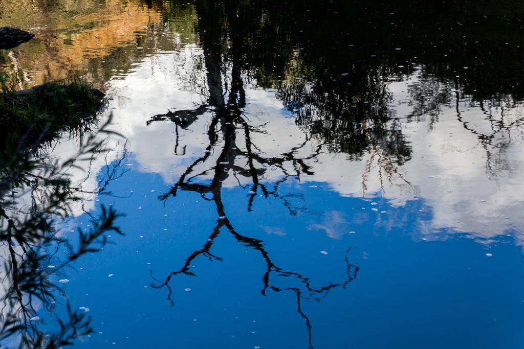 tree-reflection-werribee-river