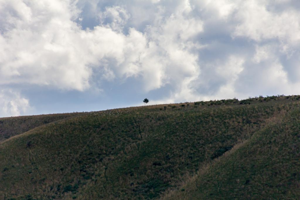 tree-the-island-werribee-gorge