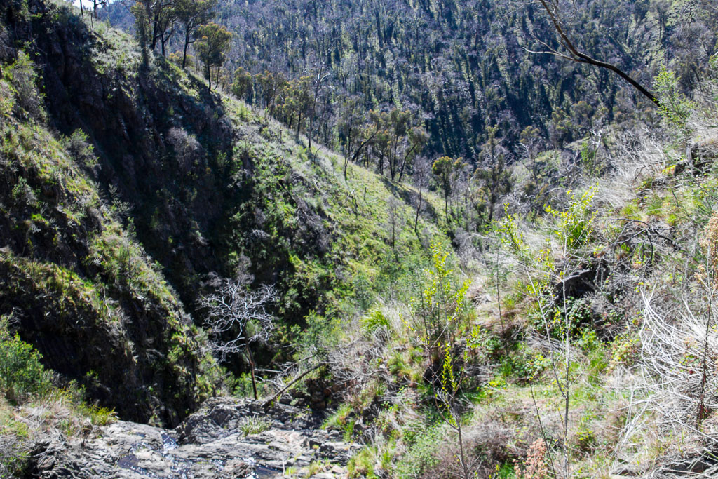 above-diggers-gully-falls