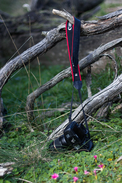 camera-strap-caught-on-branch