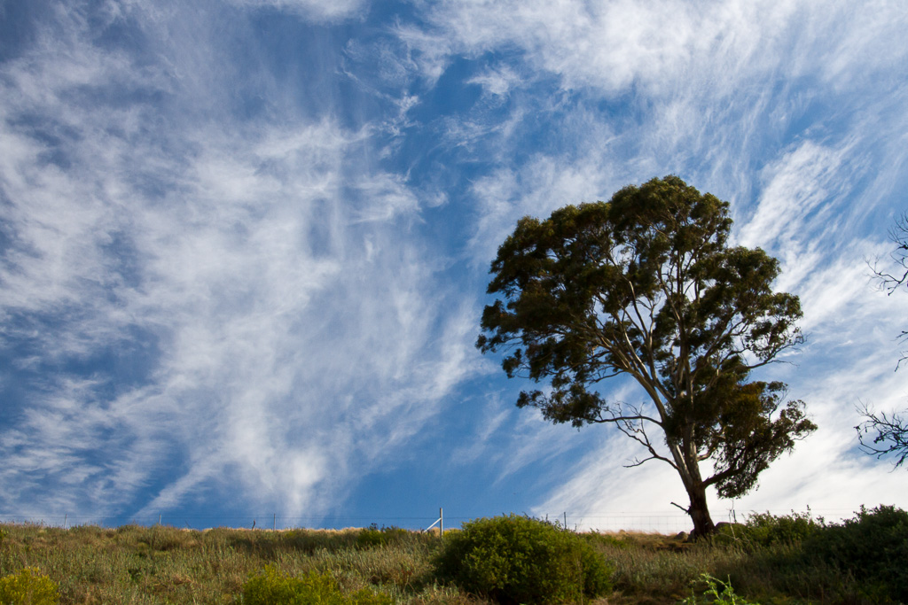 cirrus-clouds-above-werribee-gorge