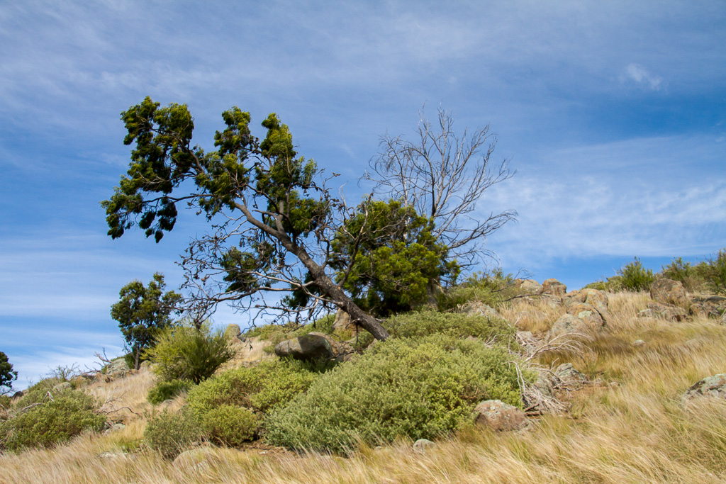 fallen-tree-granites-werribee-gorge