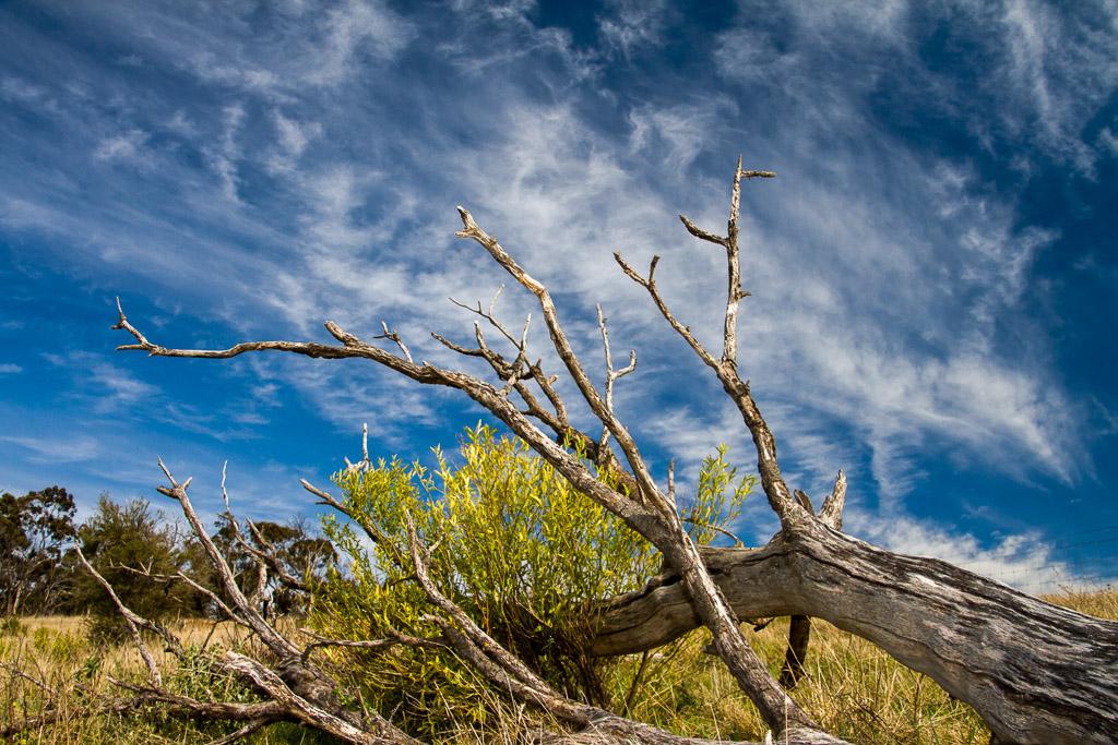 fallen-tree-werribee-gorge