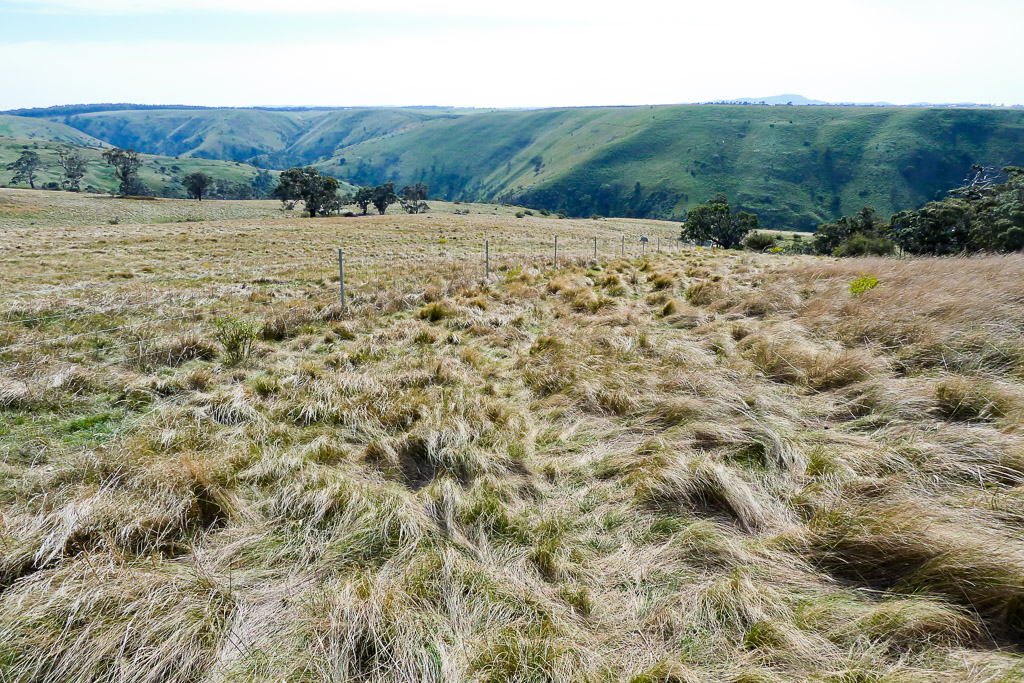 grass-blowing-windy-day-werribee-gorge