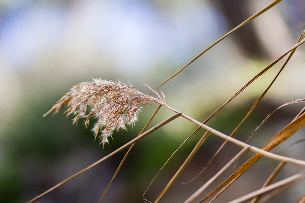 native-grass-bokeh