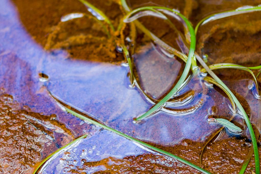oil-look-water-sutherland-creek-steiglitz