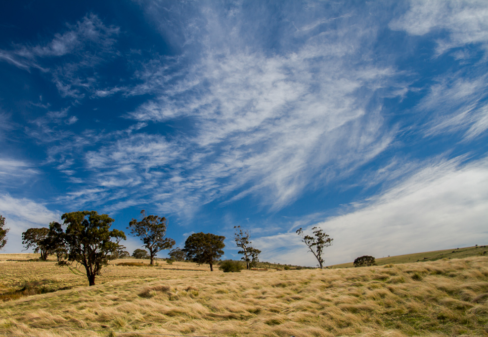 paddocks-near-werribee-gorge