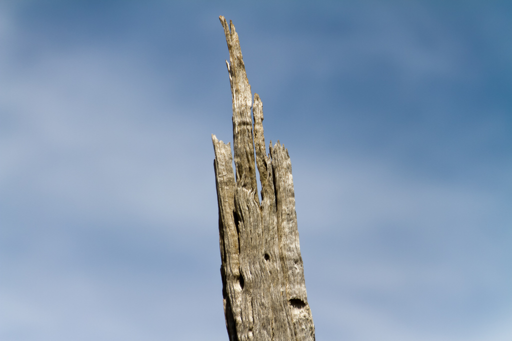 split-branch-granites-werribee-gorge