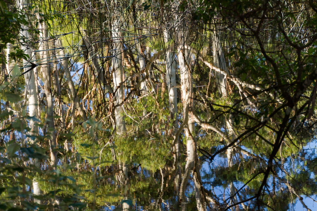 tree-reflection-sanatorium-lake-macedon-ranges