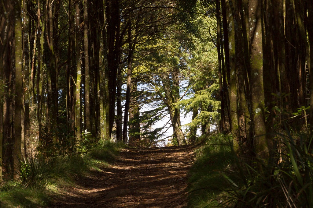 trees-walking-track-macedon-ranges