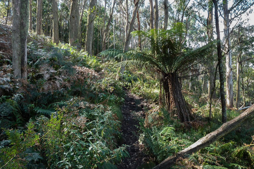 walking-track-mount-macedon-climb