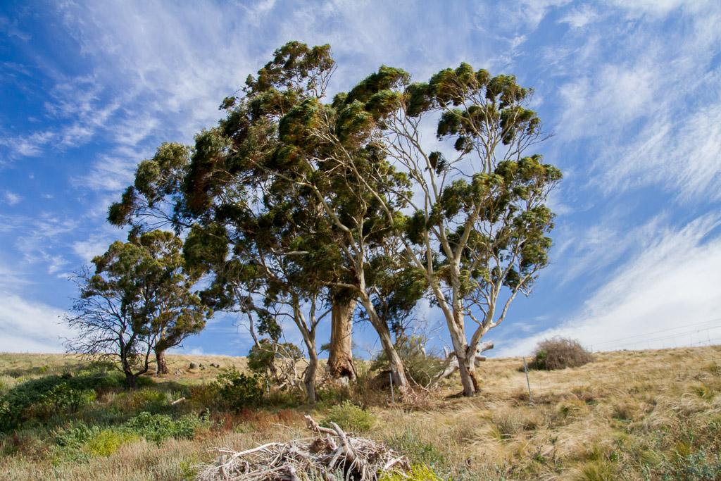 wind-blowing-trees-near-werribee-gorge