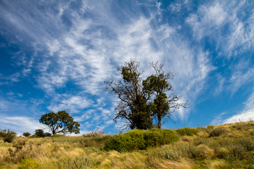 wind-trees-werribee-gorge