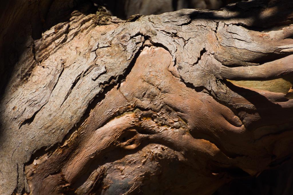 eucalypt-bark