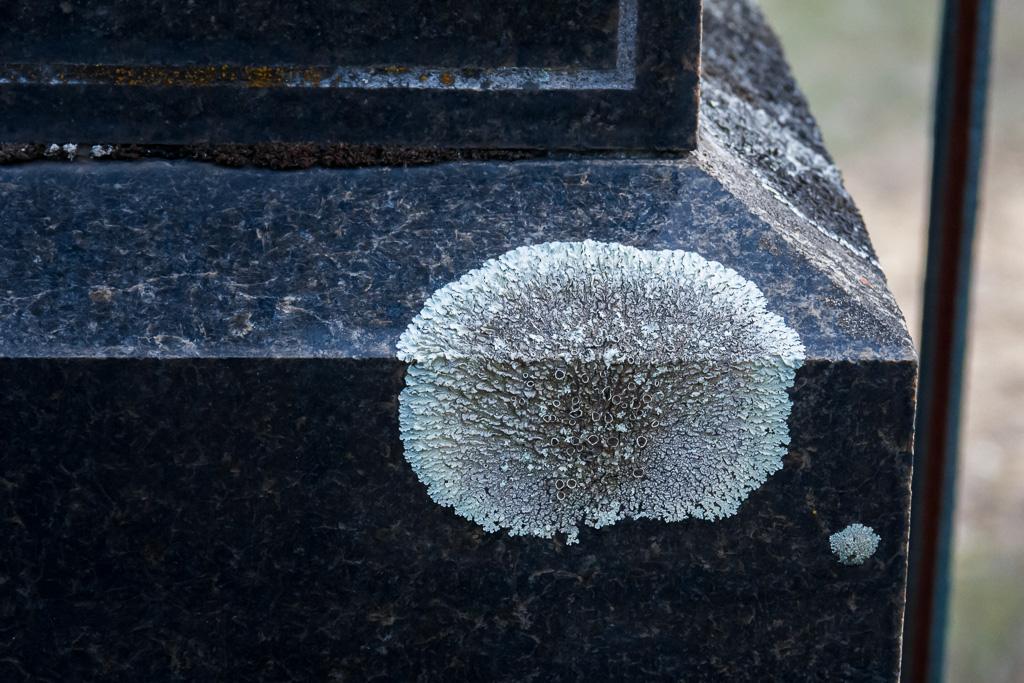 fungi-marble-grave-stone