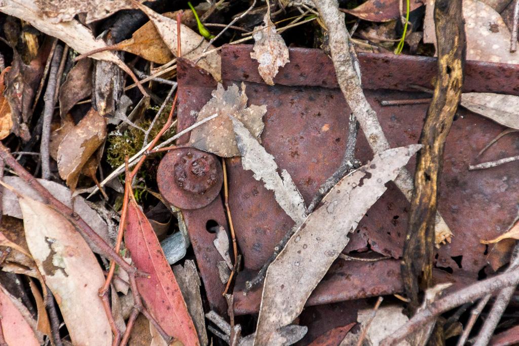 metal-remains-steiglitz