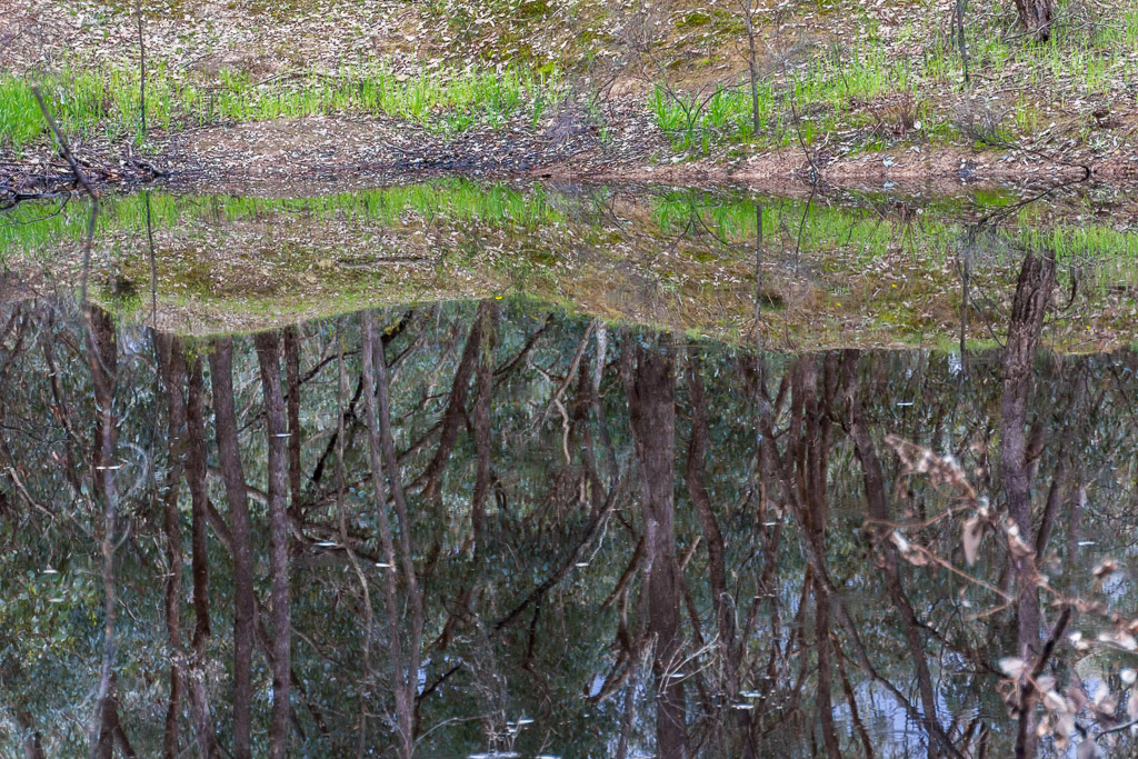 mirror-reflection-of-trees-water