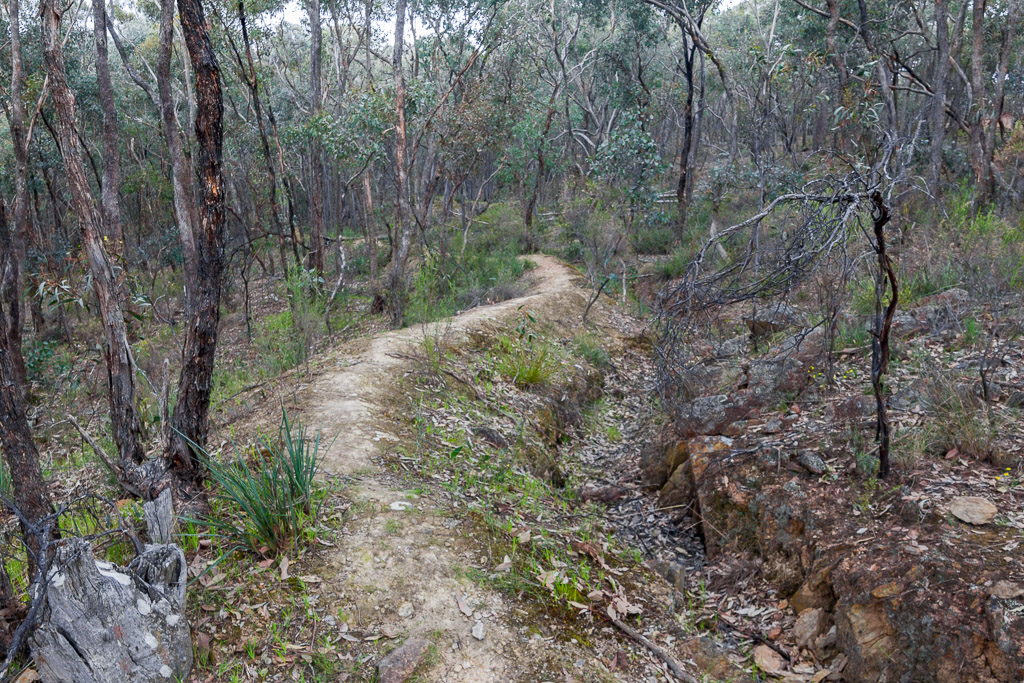 old-water-race-track-chewton